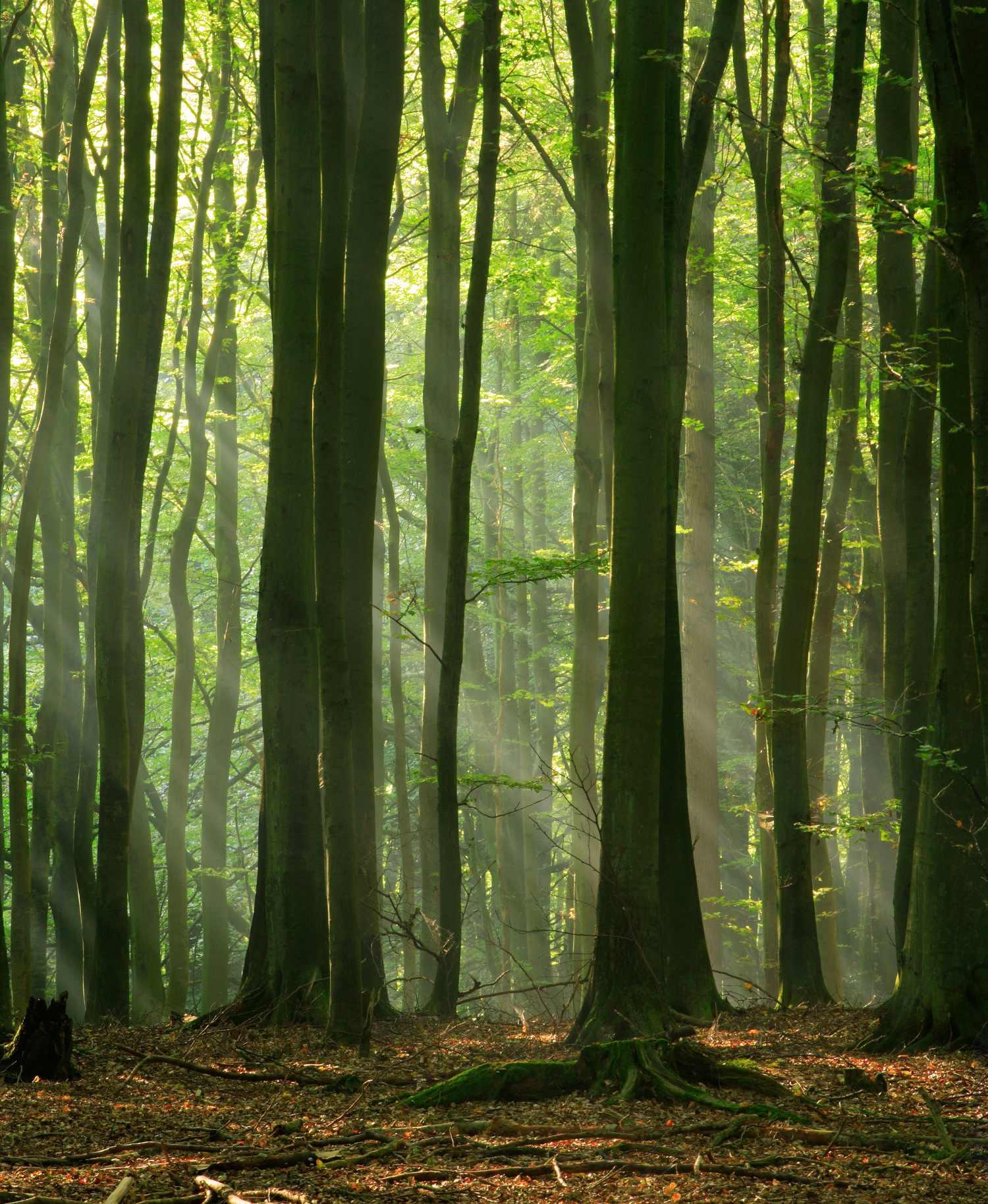 Small Woods – Woodland Insurance – Henshalls Insurance Brokers